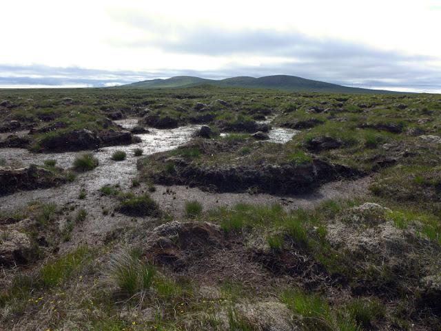 Passing through the peatlands